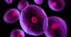 افتتاح بانک سلولهای بنیادی خون قاعدگی در ایران